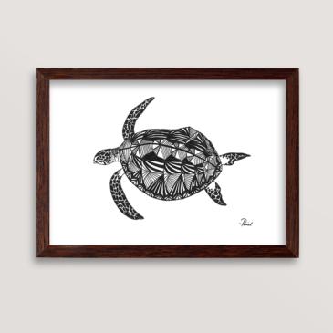 havskildpadde2